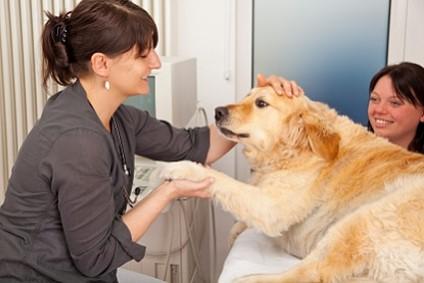 Hunde in Behandlung